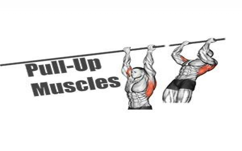 Muscles Worked in Pull Ups and Chin Ups